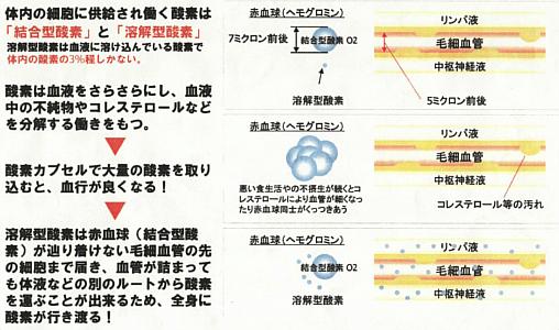 血管内の酸素の循環図